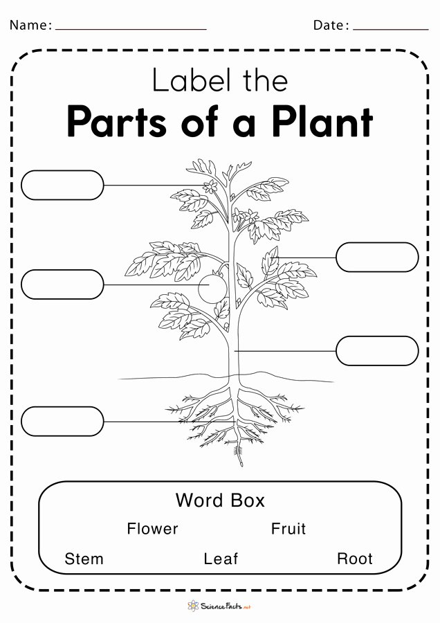Parts Of A Plant Worksheet Ideas Parts Of A Plant Worksheets