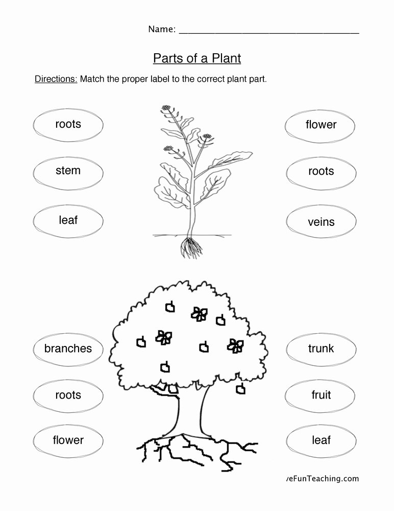 Parts Of A Plant Worksheet Ideas Plant Parts Worksheet