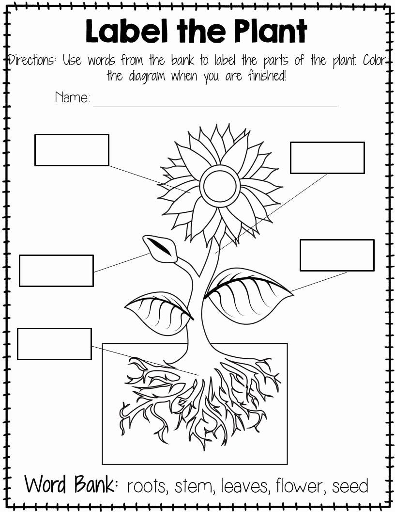 Parts Of A Plant Worksheet Inspirational Plant Labeling Worksheet Free