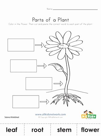 Parts Of A Plant Worksheet Lovely Parts Of A Plant Cut and Paste