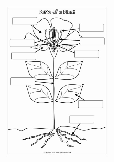 Parts Of A Plant Worksheet Printable Parts Of A Plant Labelling Worksheets Sb Sparklebox