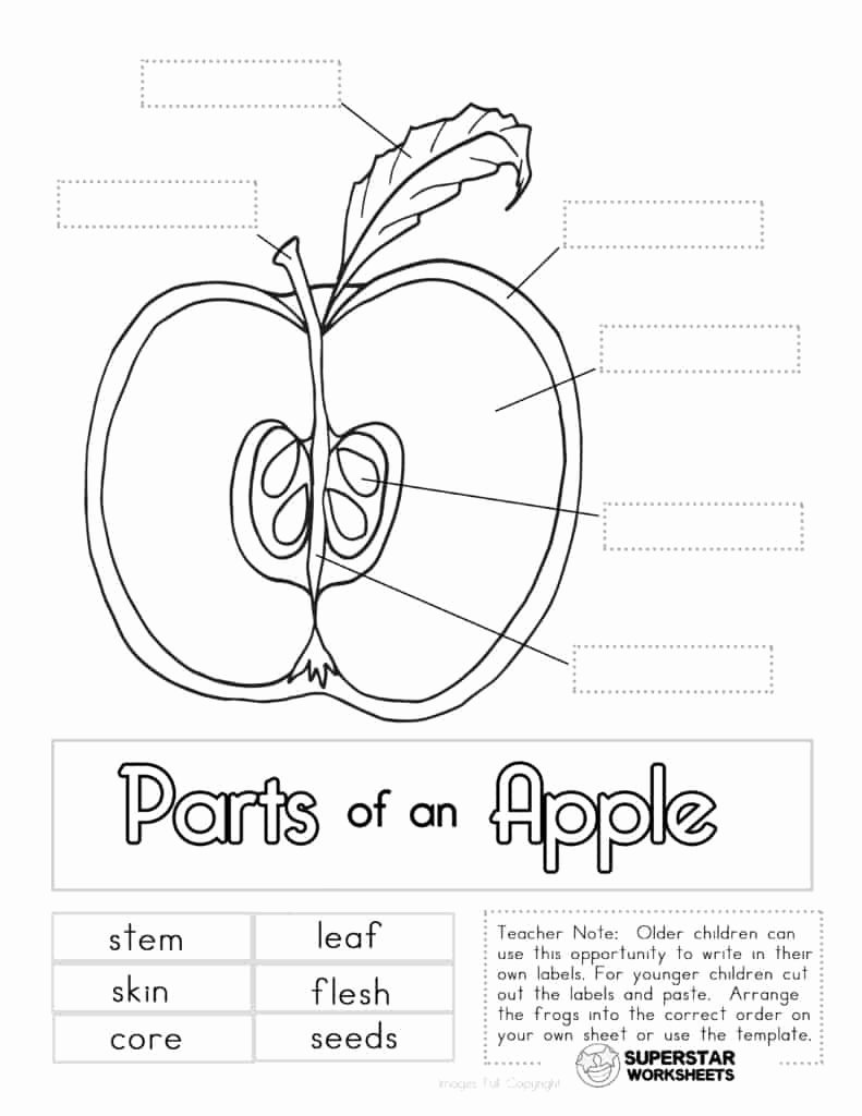 Parts Of An Apple Worksheet Best Of Apple Worksheets Superstar Worksheets
