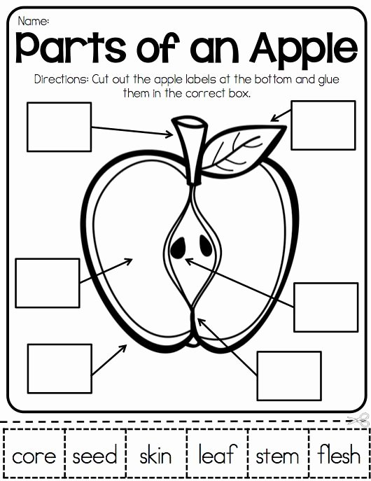 Parts Of An Apple Worksheet Fresh Parts Of An Apple Apple Activities