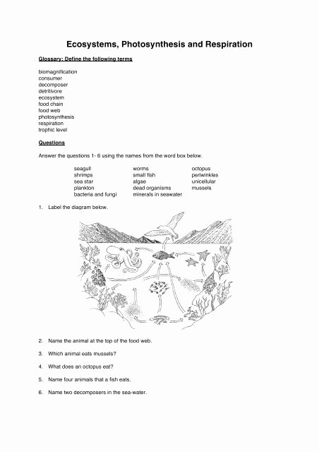 Photosynthesis and Respiration Worksheet Answers Best Of Ecosystems Synthesis and Respiration Worksheet Booklet