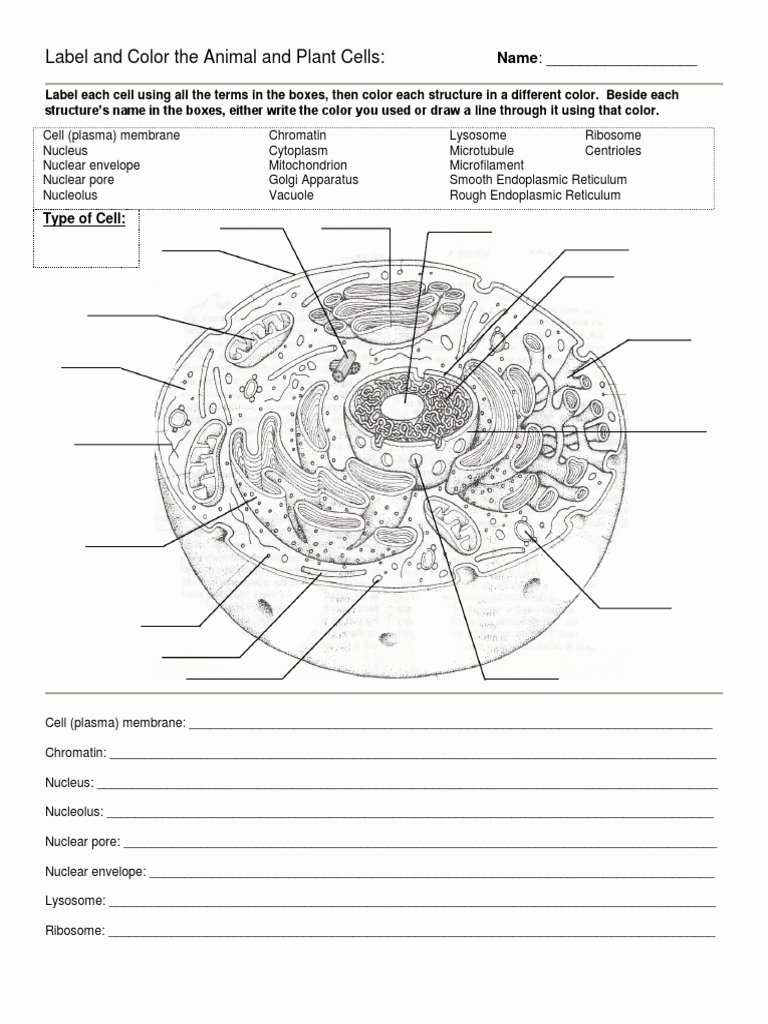 Plant Cell Worksheets to Label Free Label and Color the Animal and Plant Cells