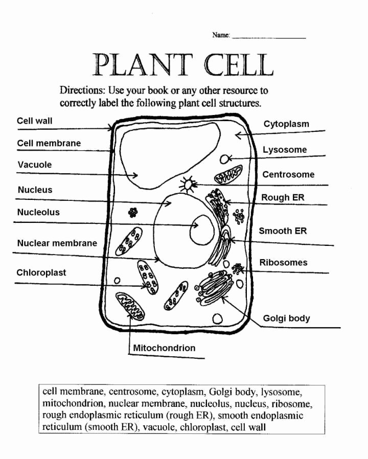 Plant Cell Worksheets to Label Fresh Label Plant Cell Worksheet