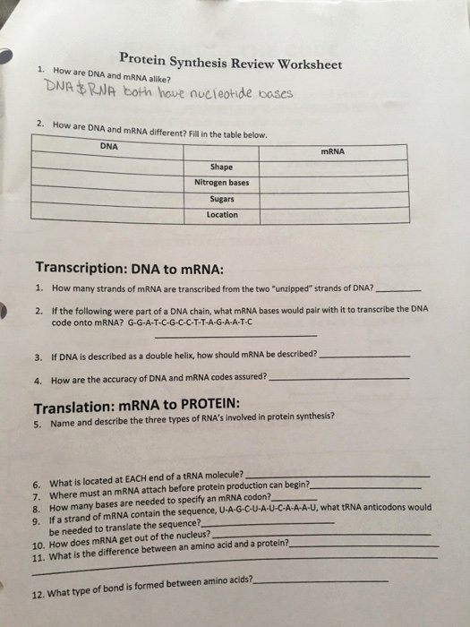 Protein Synthesis Review Worksheet Answers Ideas solved Protein Synthesis Review Worksheet 1 How are Dna