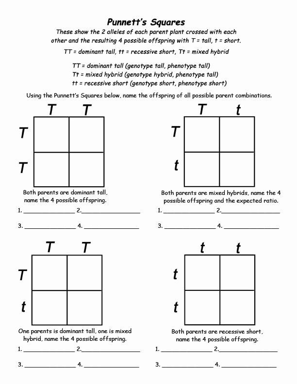 Punnett Square Practice Problems Worksheet Free 5 Best Printable Punnett Square Worksheets Printablee