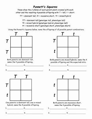 Punnett Square Practice Problems Worksheet Inspirational Free Punnett Square Practice Worksheet