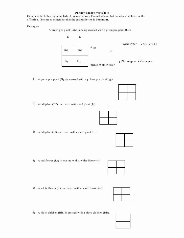 Punnett Square Practice Problems Worksheet Kids Punnett Square Worksheet