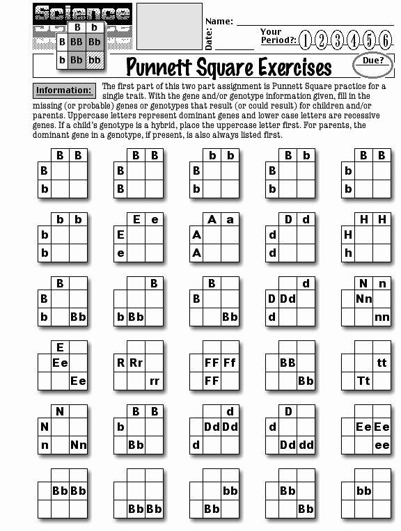 Punnett Square Practice Problems Worksheet Lovely Punnett Square Practice Worksheets In 2020