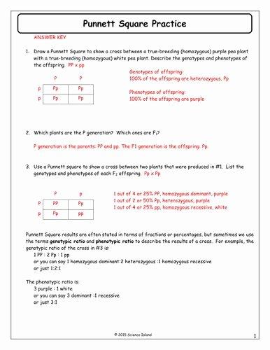 Punnett Square Practice Problems Worksheet New 7 Punnett Square Practice Answer Keycx