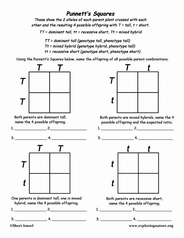 Punnett Square Practice Problems Worksheet Printable Mendel Experiments Lessons Tes Teach Genetics for Kids