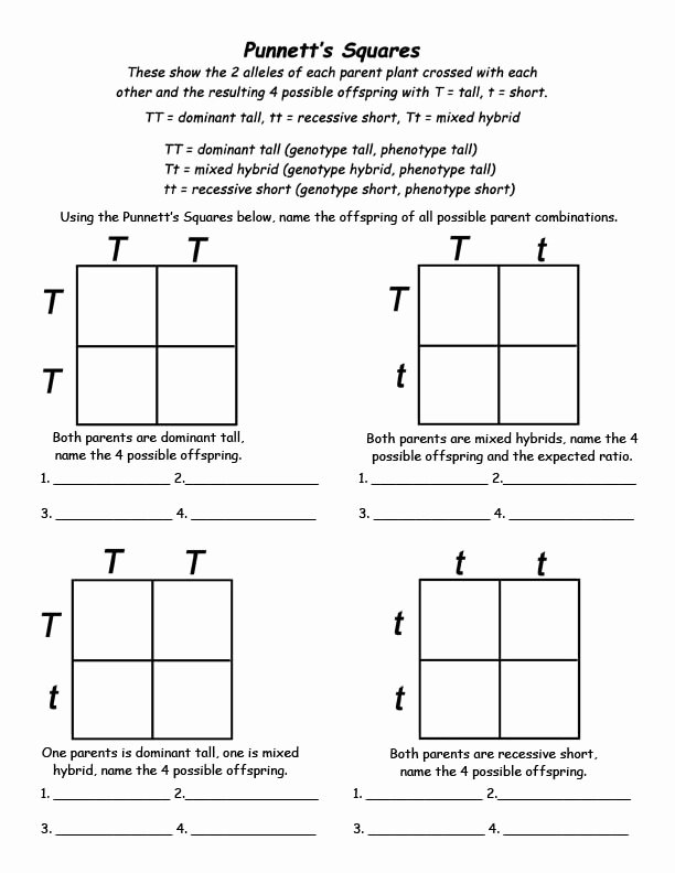 Punnett Square Practice Worksheet Answers Free 5 Best Printable Punnett Square Worksheets Printablee