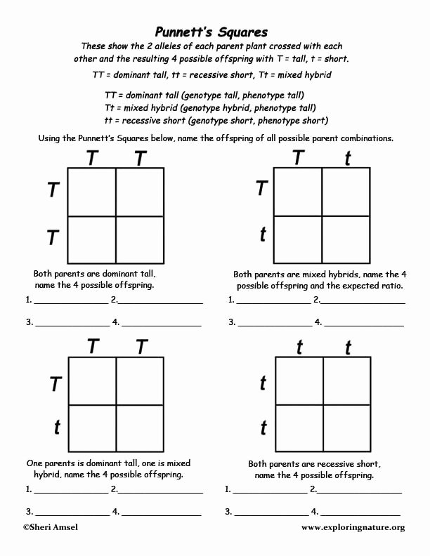 Punnett Square Practice Worksheet Answers Ideas Mendel Experiments Lessons Tes Teach Genetics for Kids