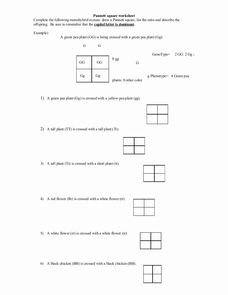 Punnett Square Practice Worksheet Answers Lovely 35 Punnett Square Practice Problems Worksheet Answers