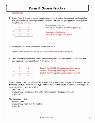 Punnett Square Practice Worksheet Answers New 7 Punnett Square Practice Answer Keycx